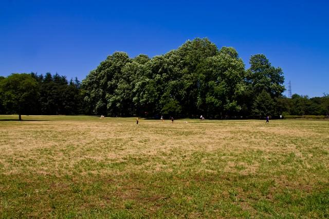 青空と広がる公園の写真