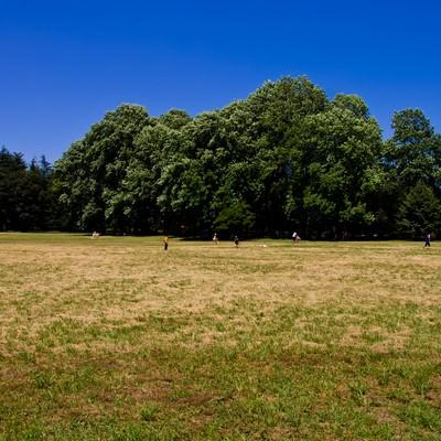 「青空と広がる公園」の写真素材