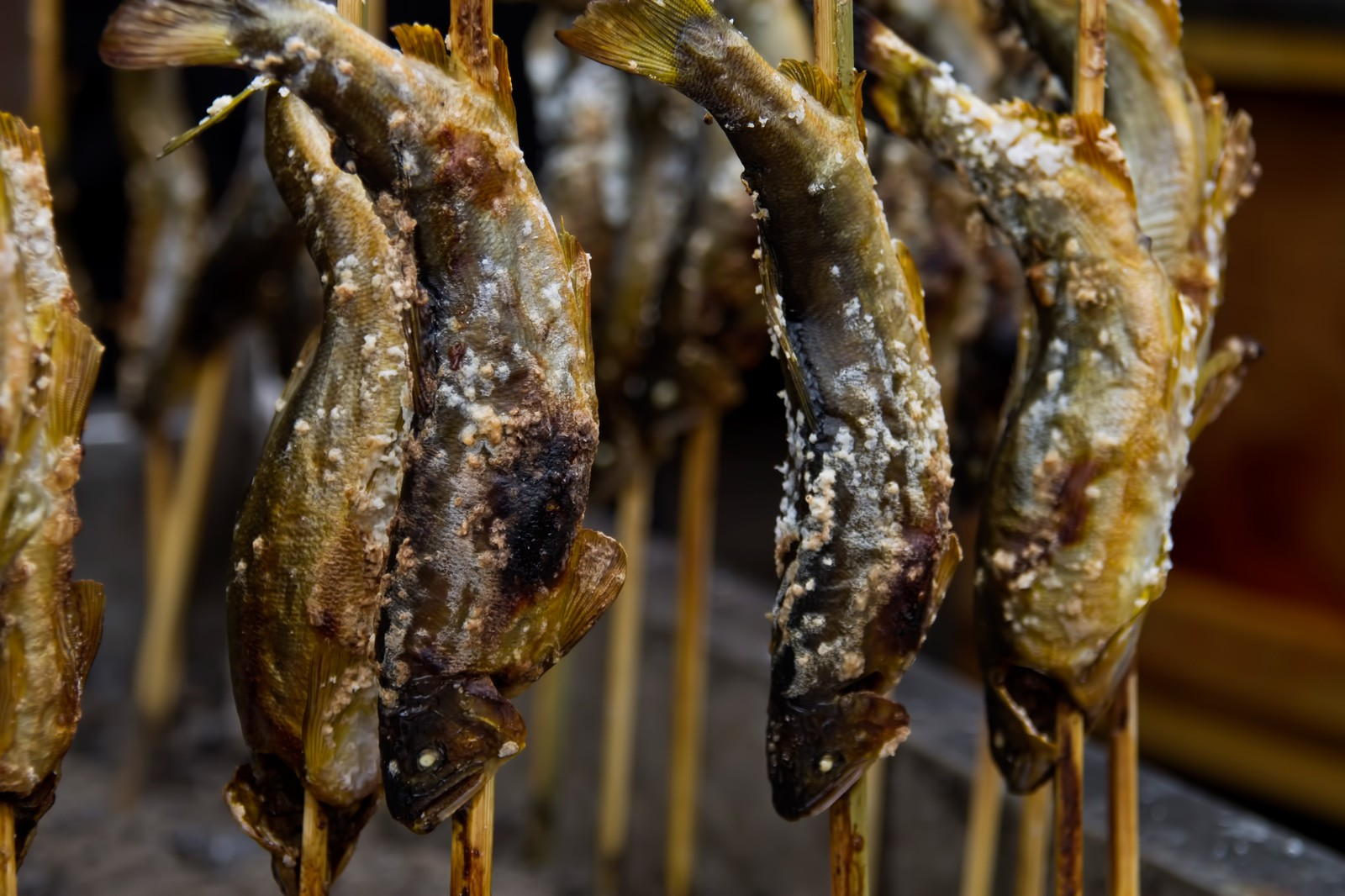 「鮎の塩焼き」の写真