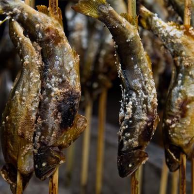 鮎の塩焼きの写真