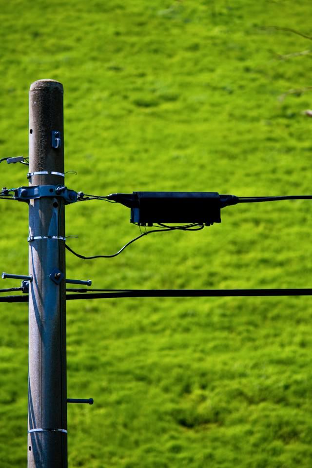 電柱と拡がる緑の写真