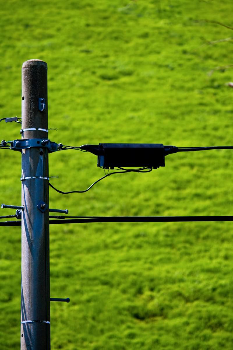 「電柱と拡がる緑」の写真