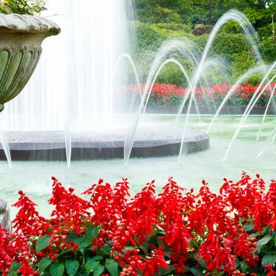 「赤い花と噴水」の写真素材