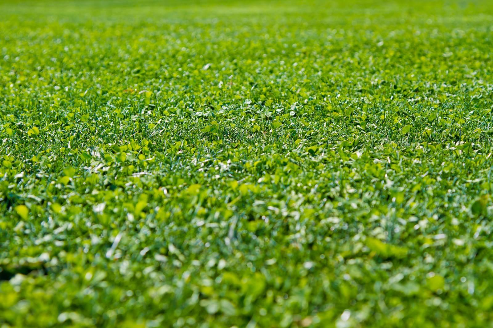 天然芝と人工芝のちがいとは?