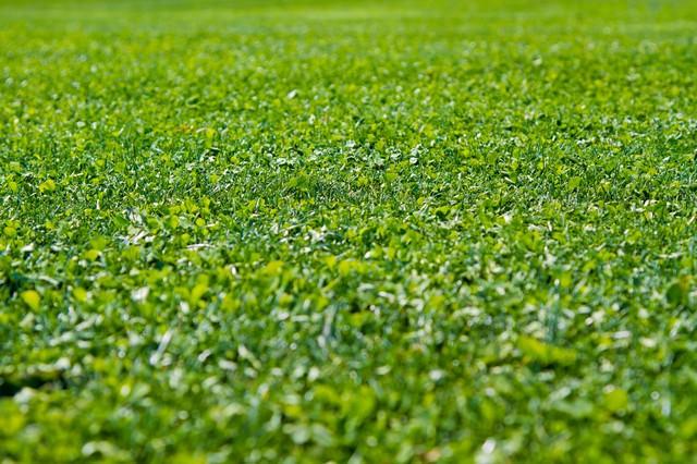 一面に広がる芝生
