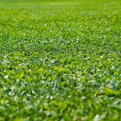「一面に広がる芝生」の写真素材