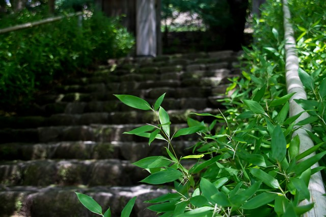 古い石段と笹の写真