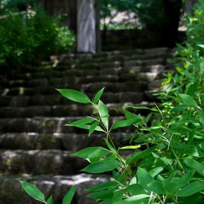 「古い石段と笹」の写真素材