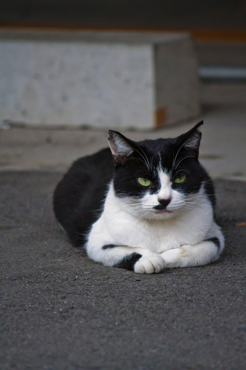 「ふてぶてしい表情で睨みつける猫」の写真