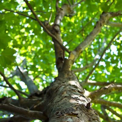 樹木と木漏れ日の写真