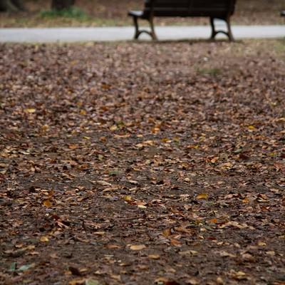 「枯葉とベンチ」の写真素材