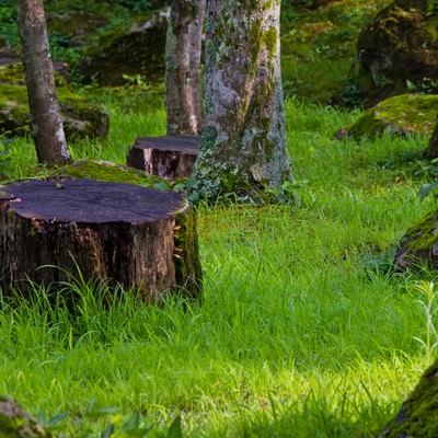 「切り株と緑園」の写真素材