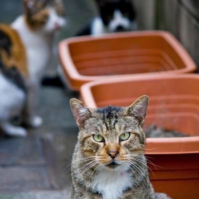 「小道の猫3匹」の写真素材