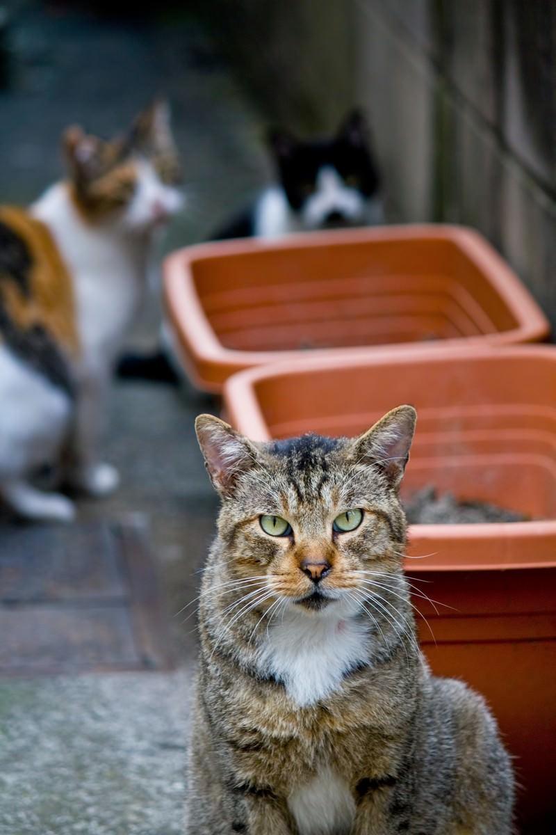 「小道の猫3匹」の写真