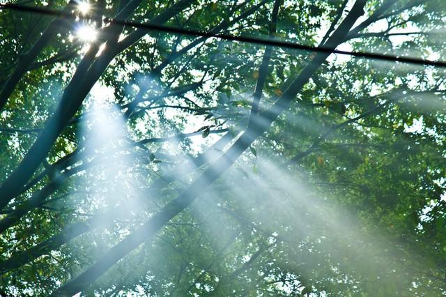 木漏れ陽と光の写真