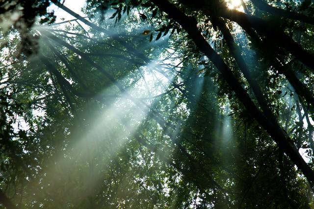 木漏れ日と日差しの写真