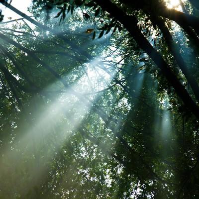 「木漏れ日と日差し」の写真素材