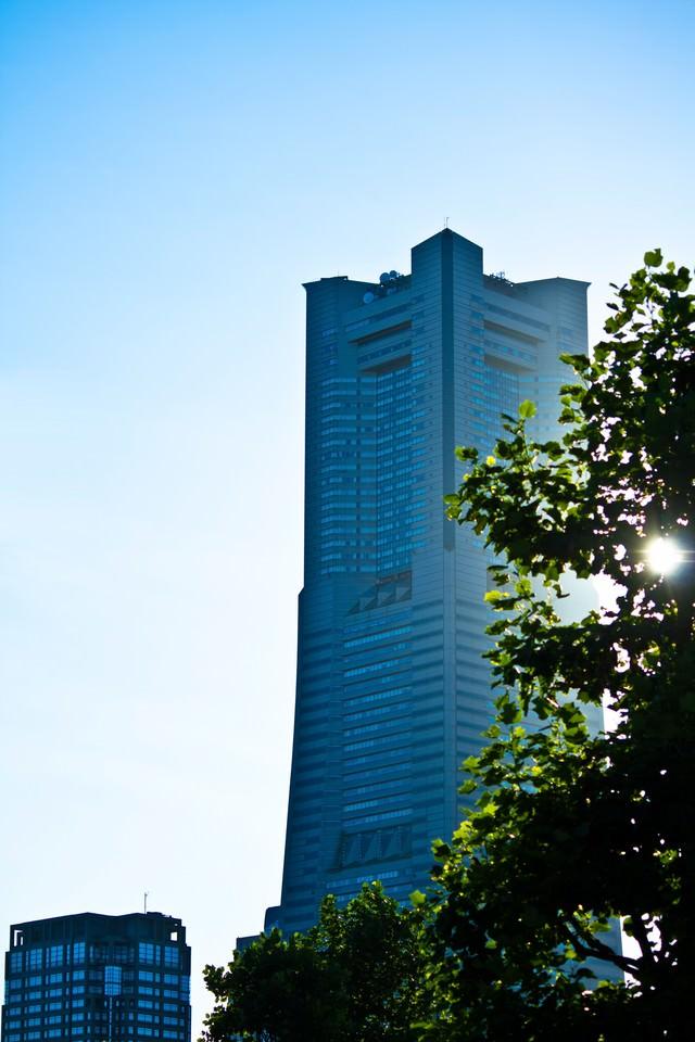 沿道の木とランドマークタワーの写真