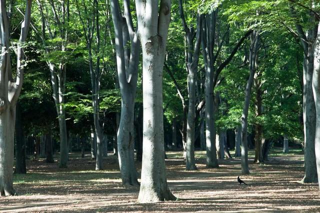 公園の木々の写真