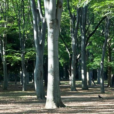 「公園の木々」の写真素材
