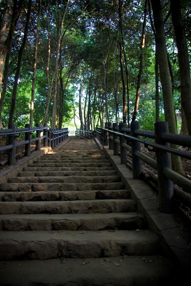 公園の上り階段の写真