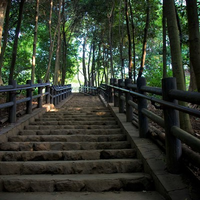 「公園の上り階段」の写真素材