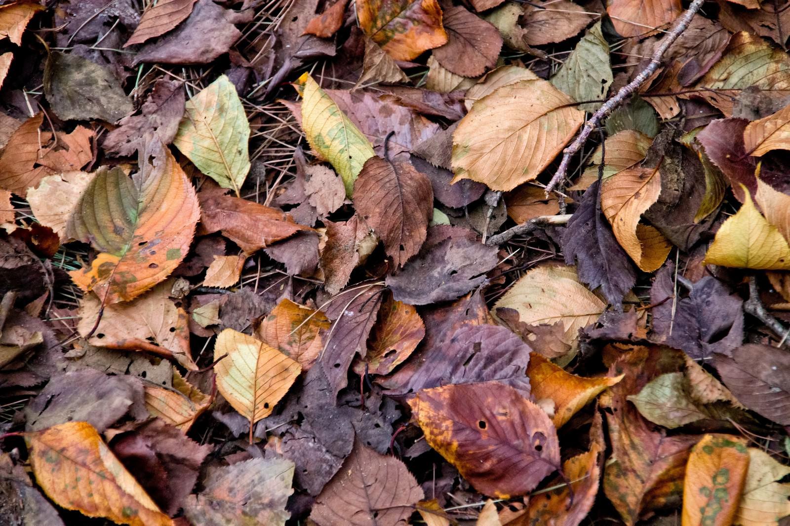 「枯葉と落ち葉」の写真