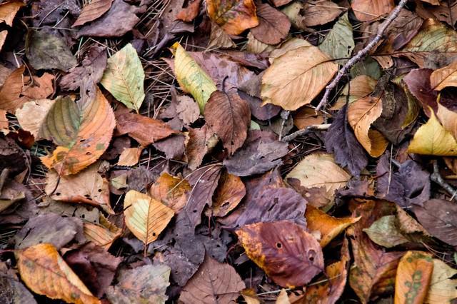 枯葉と落ち葉の写真