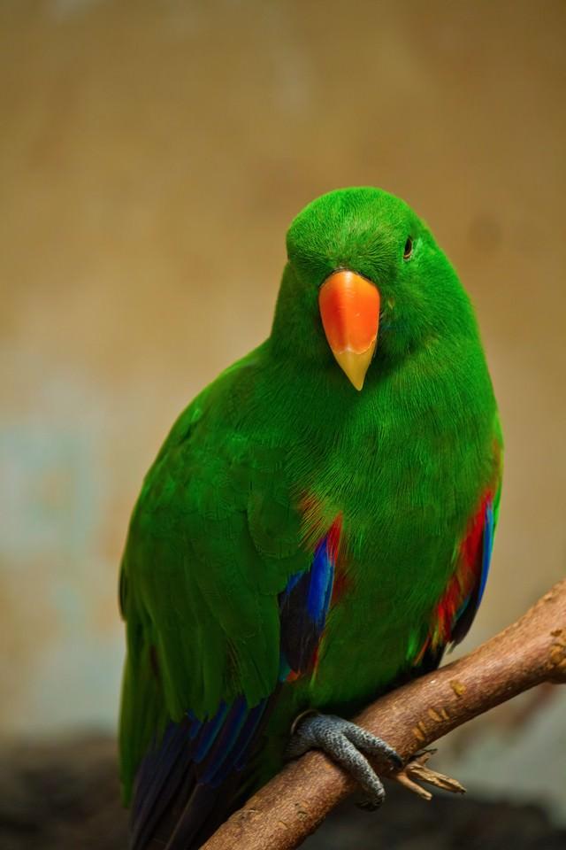 緑のインコちゃんの写真