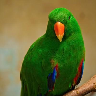 「緑のインコちゃん」の写真素材