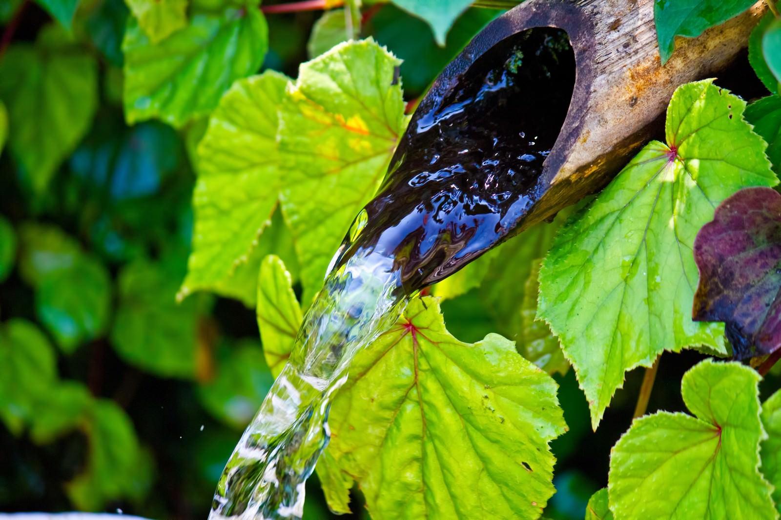 「流れ続ける湧水流れ続ける湧水」のフリー写真素材を拡大