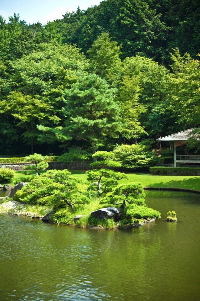日本庭園の池の写真