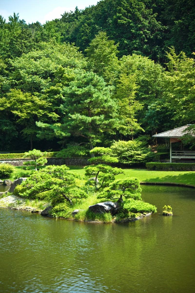 「日本庭園の池」の写真