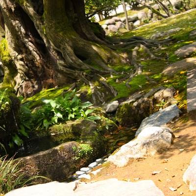 「日本庭園の小道」の写真素材