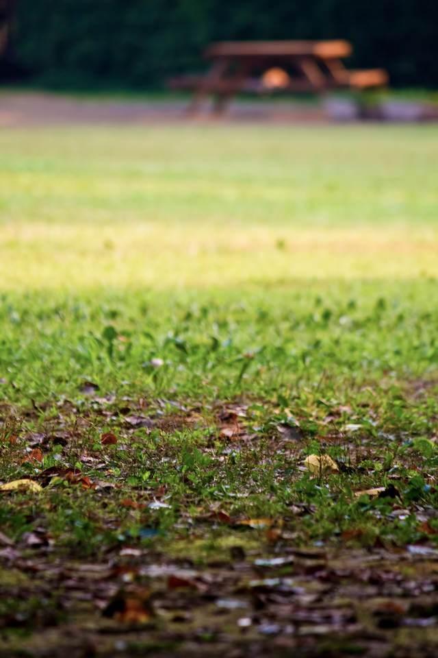 落ち葉と公園のベンチの写真