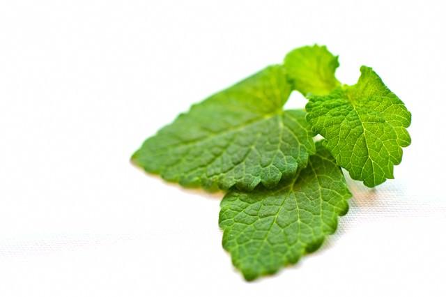 レモンハーブの葉の写真