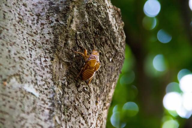 蝉のぬけ殻の写真