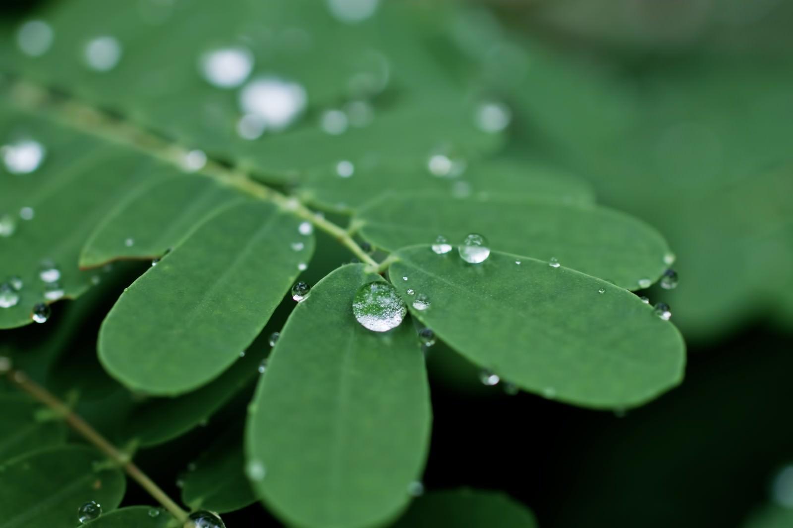 「水滴をはじく葉」の写真