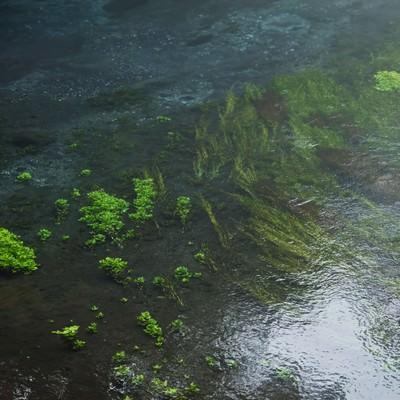 透き通る柿田川の写真
