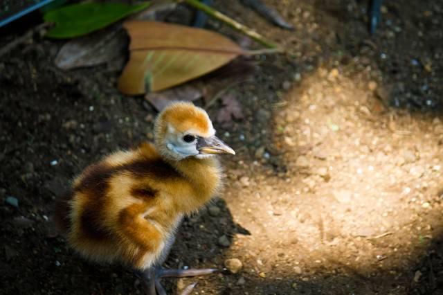 生まれたばかりの小鳥の写真