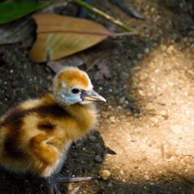 「生まれたばかりの小鳥」の写真素材