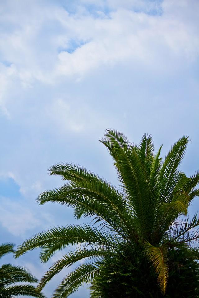 ヤシの木と空の写真