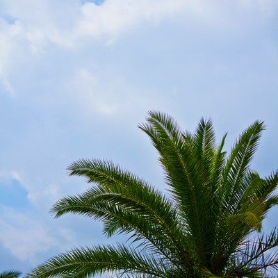 「ヤシの木と空」の写真素材
