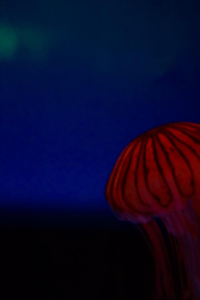 アカクラゲ アカクラゲ 沈没都市(フォトモンタージュ) 岩場にいるペンギン 頭をちょっとだけ出す