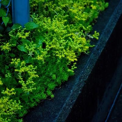 「雨に濡れた路肩の雑草」の写真素材