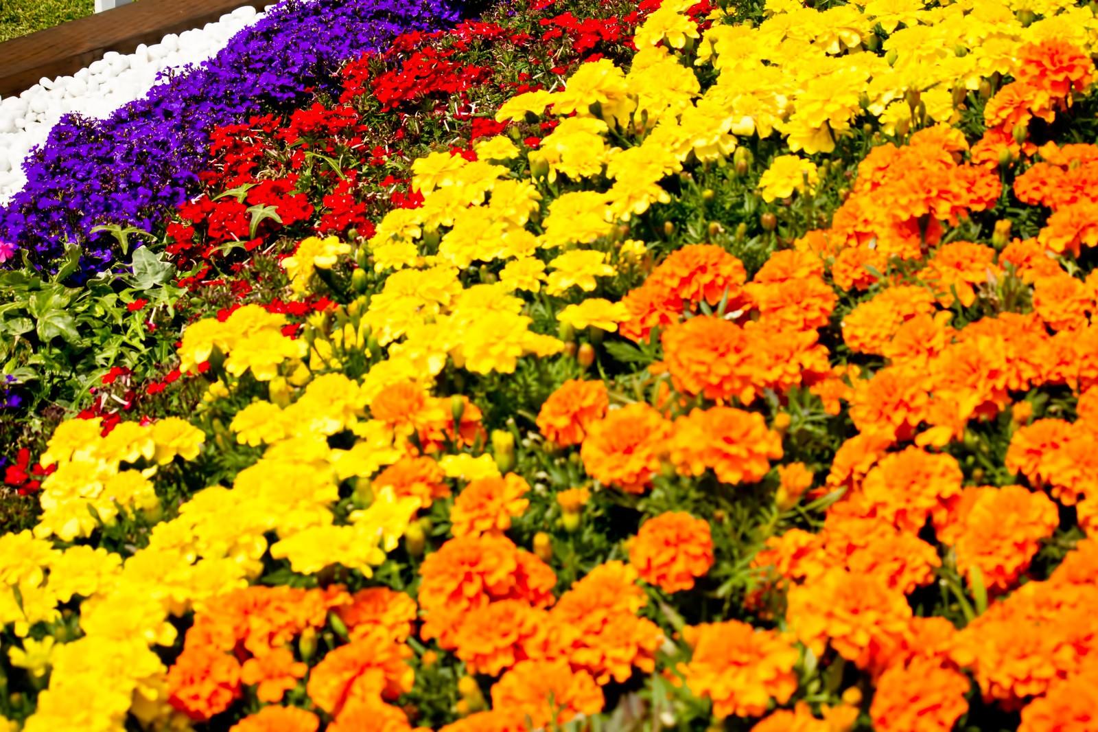 「色鮮やかな花壇」の写真