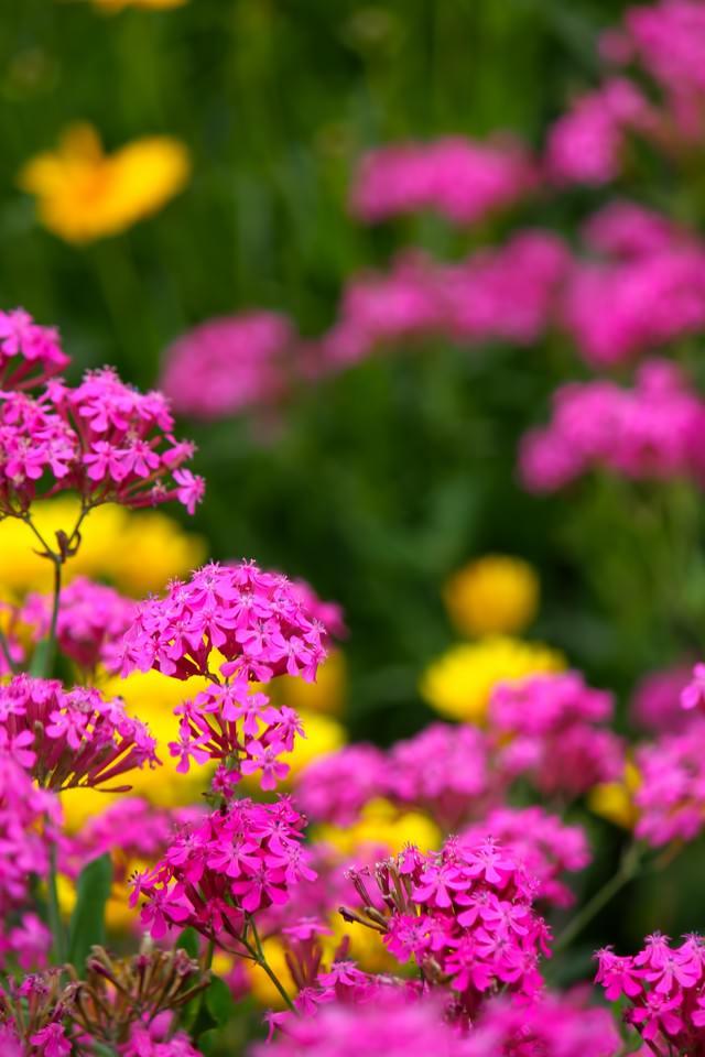 ピンクの小さな花の写真