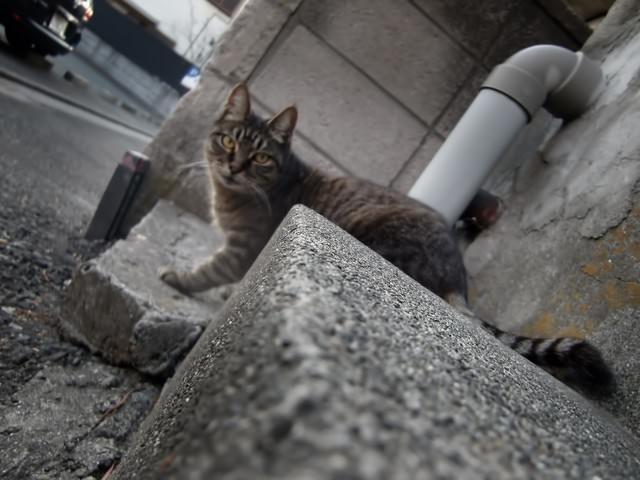 様子を伺う猫の写真