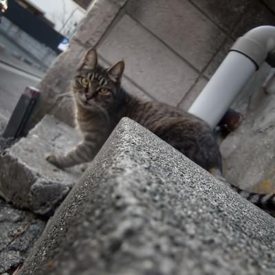 「様子を伺う猫」の写真素材