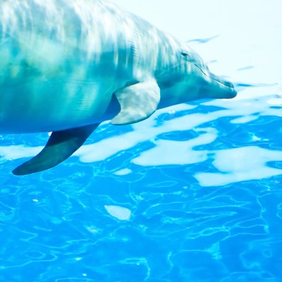 「水族館のイルカ」の写真素材